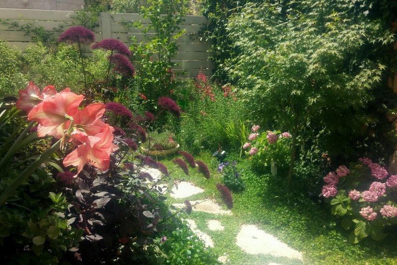 שביל קטן עטוף צמחייה פורחת