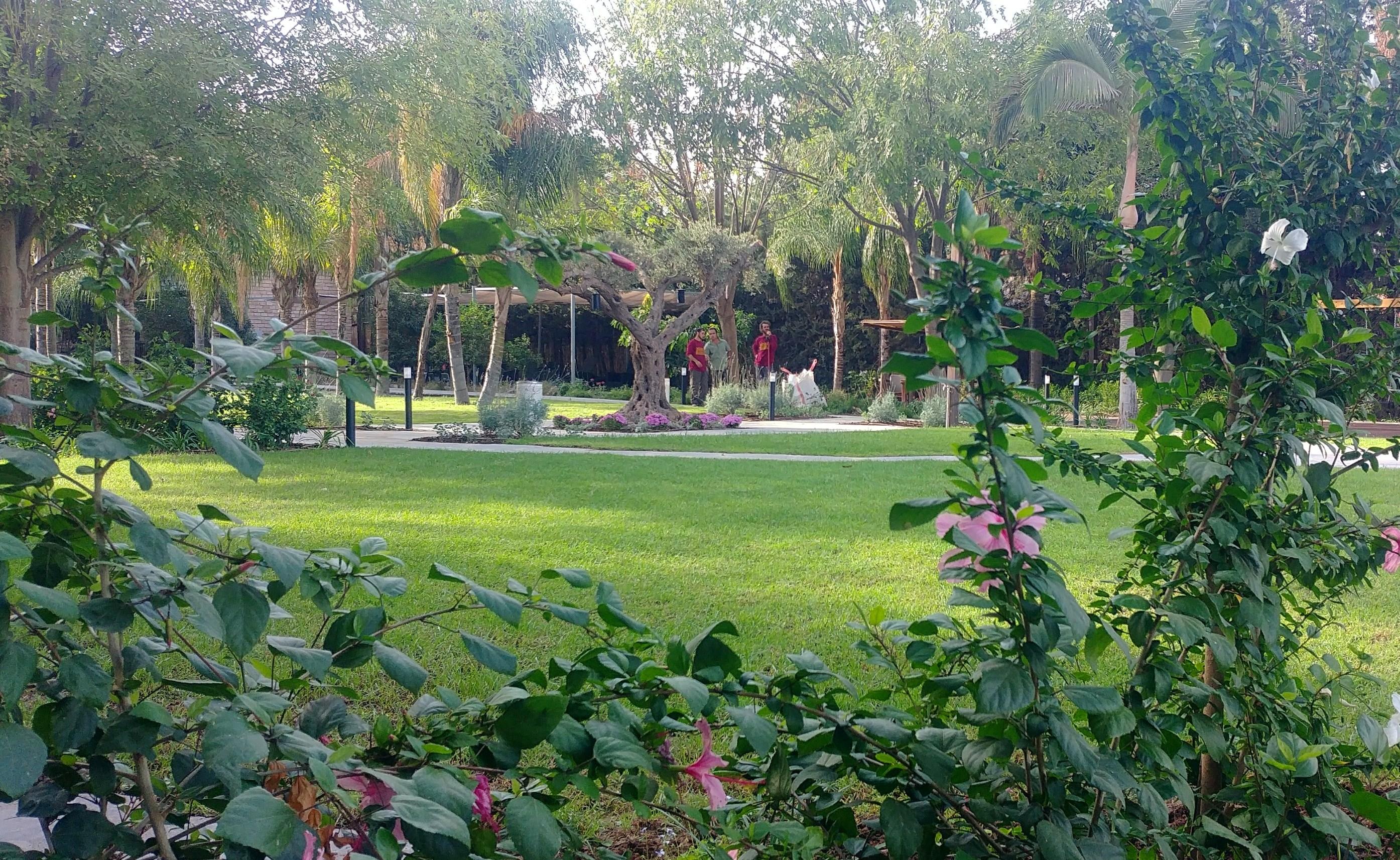 גן במלון חלומות נפתלי. גליל עליון (3)