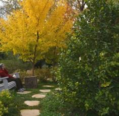 גן פרטי בעמק החולה. תכנון נוף וביצוע - גרדניה. ריהוט גן - wood way. צילום-טניה אילוז