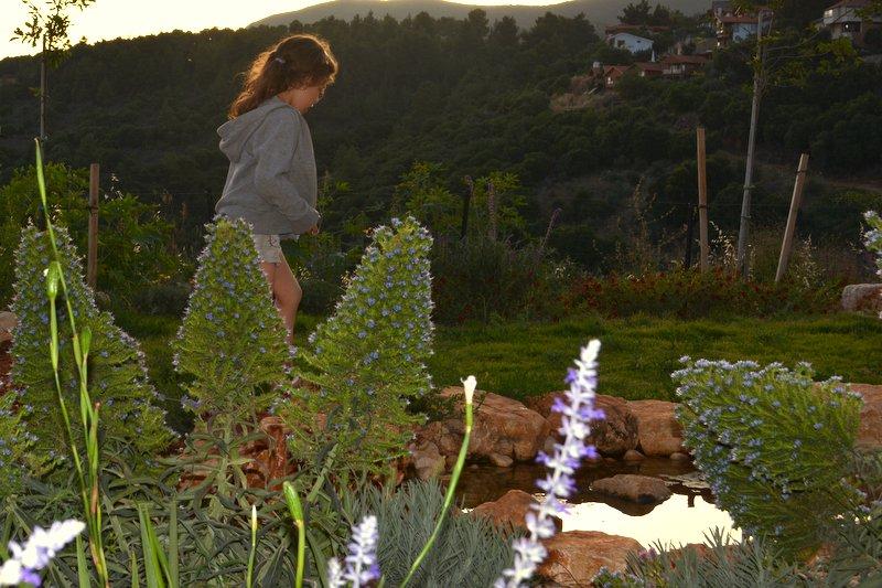 הגן של דורון שפר (14)