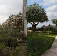 לפני ואחרי (7)