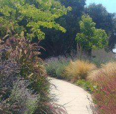 NEA garden (1)