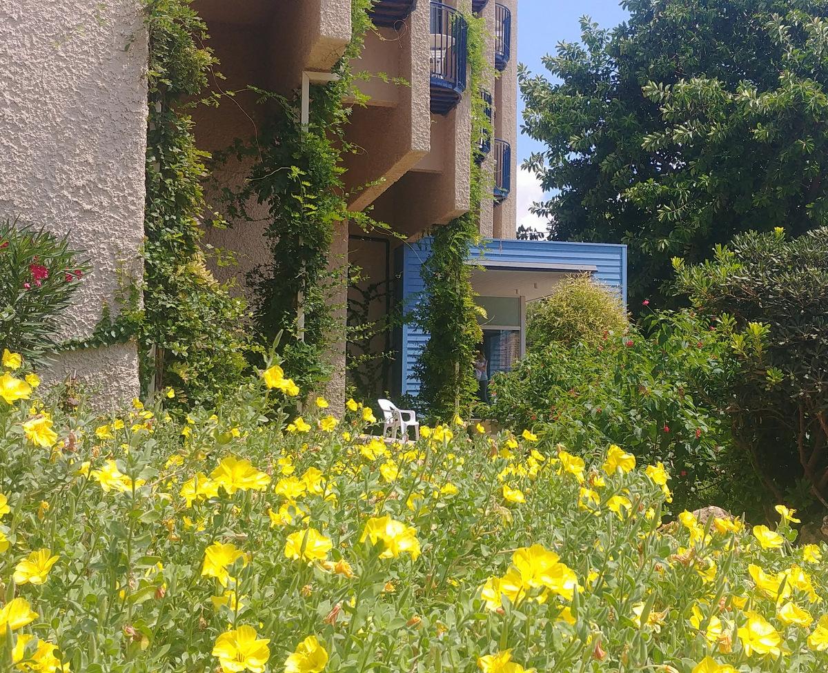 NEA garden (2)