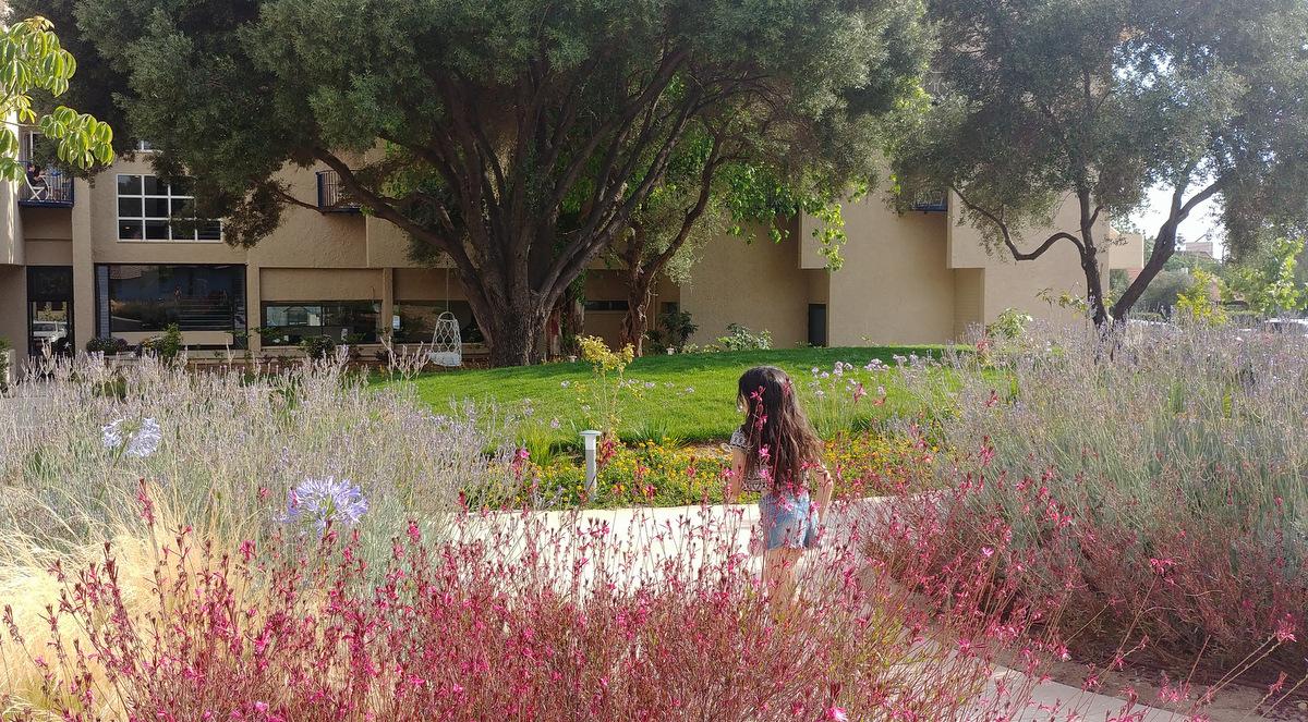 NEA garden (8)