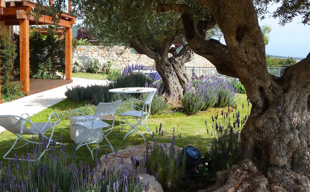 עצי זית וותיקים משמשים כבסיס לגן