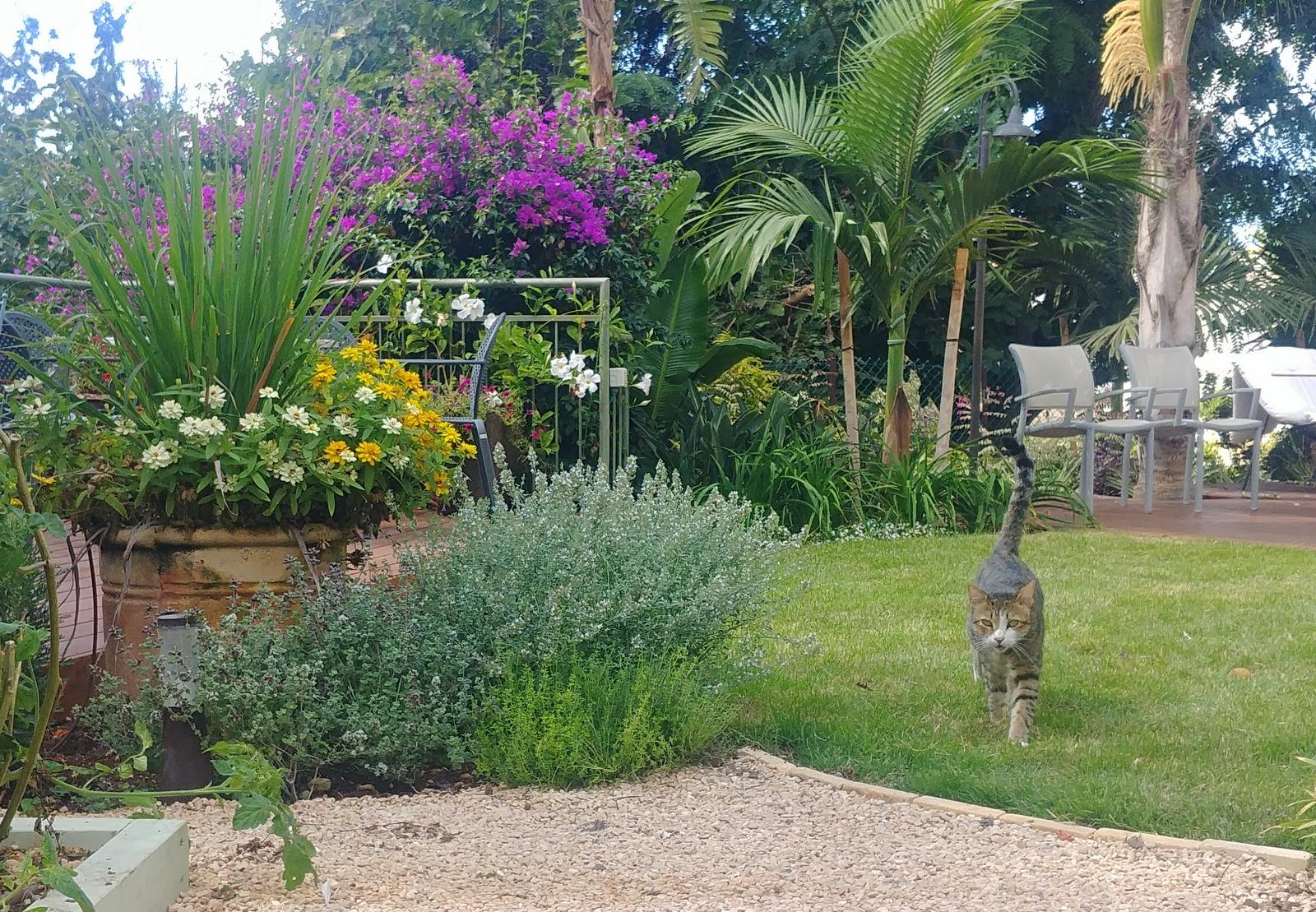 small garden in Haifa (8)