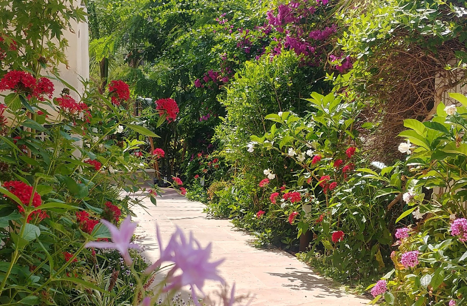 small garden in Haifa (9)